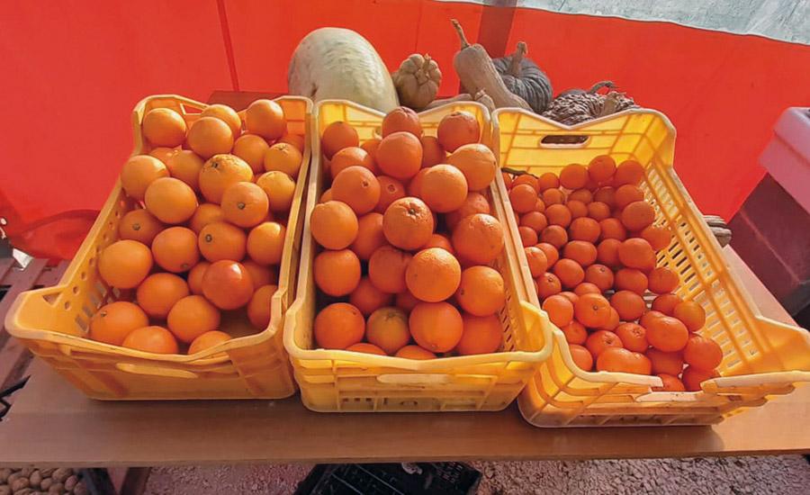 Al podere OrtInsieme arrivano le arance che sfidano la